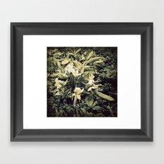 Hidden Honeysuckle Framed Art Print