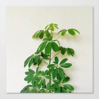plant Canvas Prints featuring Plant by sakinarawr