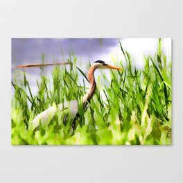 Master of the Marshes  -  Blue Heron Canvas Print