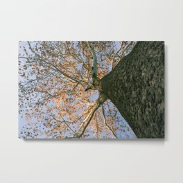Fall is in the Air (and on the Leaves) Metal Print