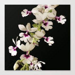 Calanthe rosea Orchid Canvas Print