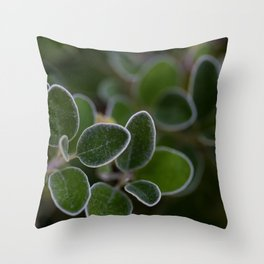 White Edged Sage in the Fall Throw Pillow