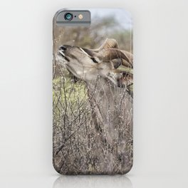Male Greater Kudo Reaching for the Leaves iPhone Case