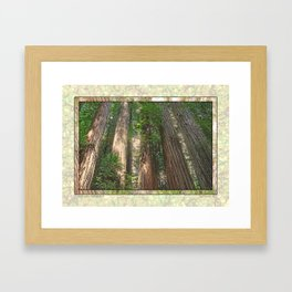 STOUT GROVE REDWOODS 4 LOOKING UP INTO THE TREES Framed Art Print