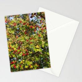 007 Stationery Cards