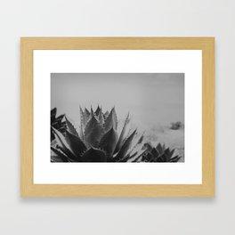 Agave I Framed Art Print