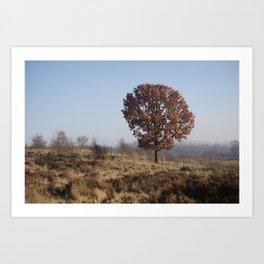 Single Tree On Chasewater Heath Art Print