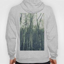 Silver Birches Hoody