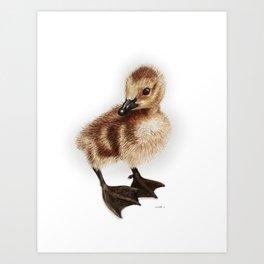 Cute Canadian Gosling Art Print