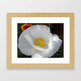White poppy Framed Art Print