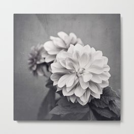 Black and White Dahlia Flower Photography, Grey Floral, Gray Neutral Nature Petals Metal Print