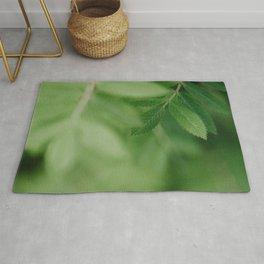Spring life - Beautiful green rowan leaves in macro image Rug