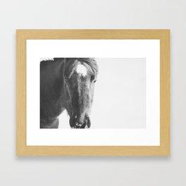 Vintage Horse Portrait in Black and White Framed Art Print