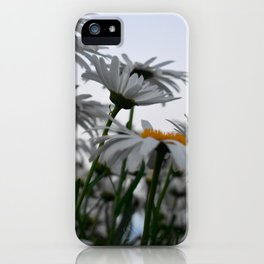 Giant Daisies iPhone Case