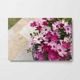 Flower pot full of African daisies Metal Print