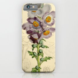 Flower 5456 meconopsis aculeata Prickly Meconopsis1 iPhone Case