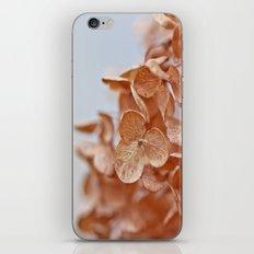 Autumn Hush iPhone & iPod Skin
