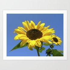 summer sunflower V Art Print