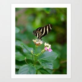 Cal. Academy Butterfly Art Print