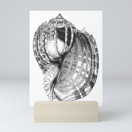 Seashell | Sea Shell | Conch Shell | Black and White | Mini Art Print