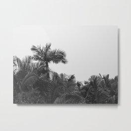 Puerto Rican Rainforest IV Metal Print