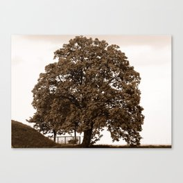 Majestic Tree - Sepia Canvas Print