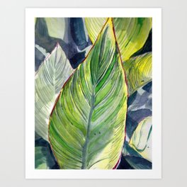 Canna Lily Leaves Art Print