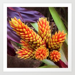 Hawaiian Tropical Elegant Jungle Flower Art Print