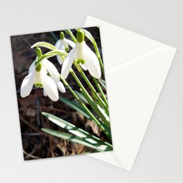 Snowdrops in Late Winter Stationery Cards