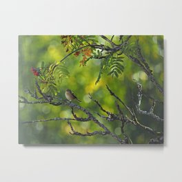Fly-catching Metal Print