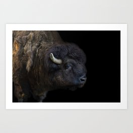 Bison Photography | Wildlife Art | Animal Art Print