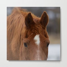 Red - The Auburn Horse Metal Print