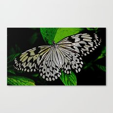 LACE -WINGED Canvas Print