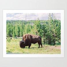 Buffalo!  Art Print