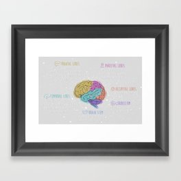 anatomy of the brain Framed Art Print