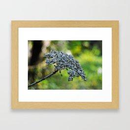 grey flower in autumn Framed Art Print