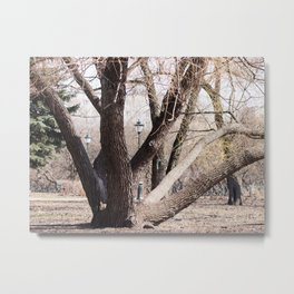 Sunny spring day   city park a huge old tree Metal Print