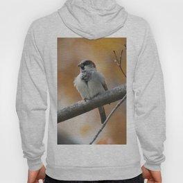 Sparrow Hoody