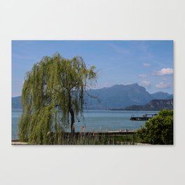 A happy willow Canvas Print