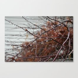 Rain photography, a Photo of a red bush covered in raindrops, It's sure rains in Washington state! Canvas Print