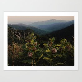 Milkweed in Shenandoah National Park Art Print