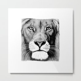 Lion face Metal Print