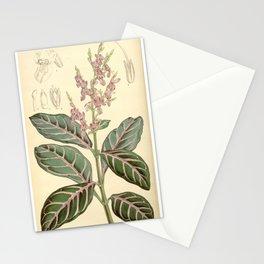 Hypoestes sanguinolenta Bot. Mag. 91. 5511. 1865 Stationery Cards