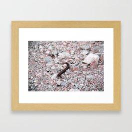 Critter Framed Art Print