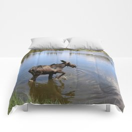 Range The Lake Comforters