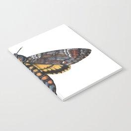 African Death's Head Hawkmoth (Acherontia atropos) Notebook
