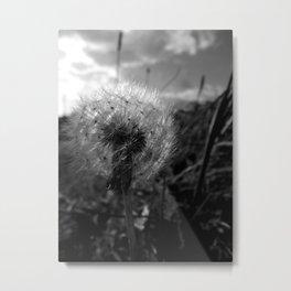 Soft Dandy Metal Print