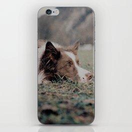 Kiva the dog iPhone Skin