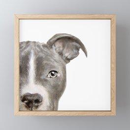 Pit bull with white background Framed Mini Art Print
