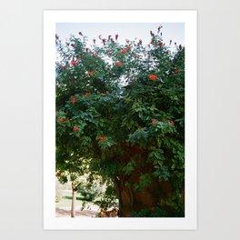 Red Flowers at El Parc de la Ciutadella Art Print